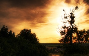 Picture road, the sky, the sun, sunset, tree, the bushes