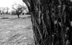 Picture sadness, the sky, grass, mood, black and white, bark, longing, The trunk of the tree, …