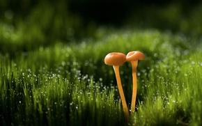 Wallpaper bokeh, macro, Rosa, glare, grass, mushrooms, drops
