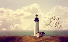 Picture sea, the sky, clouds, coast, lighthouse, horizon, house, a flock of birds