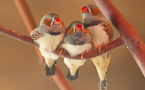 Picture bird, branch, beak, parrot, trio