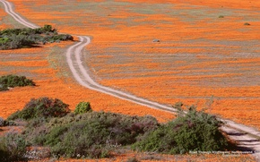 Picture Wallpaper, Widescreen, Road, Fullscreen, S. Africa, Wildflowers, Namaqualand