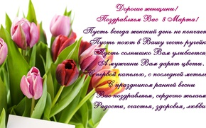 Wallpaper tulips, March 8, tulips, congratulations, spring, women's day