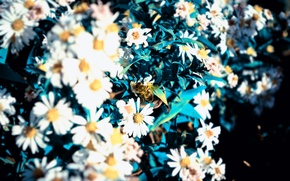 Picture Macro, Flowers, Bee