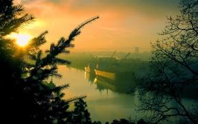 Wallpaper trees, morning, port
