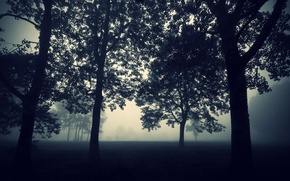 Picture The darkness, Tree, Fog, Mystic, Mist, Nature, Forest, Trees, Darkness, Wallpaper, Twilight, The evening