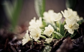 Picture greens, leaves, drops, macro, flowers, earth, plants, focus, spring, white