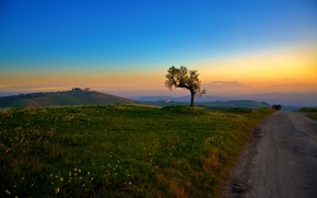 Wallpaper hills, morning, grass, tree, road