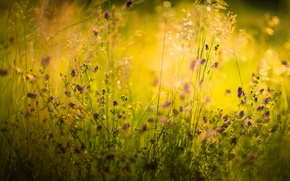 Picture summer, grass, macro, nature