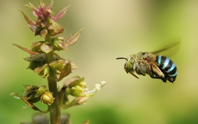 Wallpaper flower, bee, plant, stem, insect, bumblebee