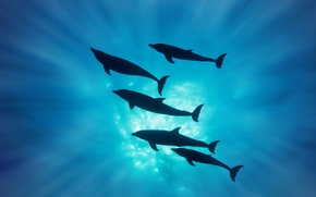 Wallpaper rays, silhouette, dolphins