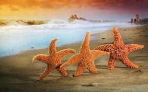 Picture sand, sea, beach, summer, stars