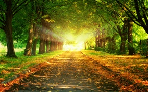 Picture road, leaves, trees, landscape, sunset, nature, beautiful, road, trees, landscape, nature, sunset, beautiful, leaves, majestic, …