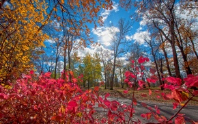 Picture autumn, the sky, leaves, clouds, trees, bright, colorful
