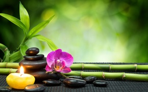 Picture stones, candle, bamboo, Orchid, stones, Spa