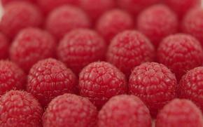 Wallpaper raspberry, the ranks, berry