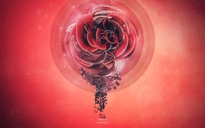 Wallpaper flower, style, creative, graphics, red, render