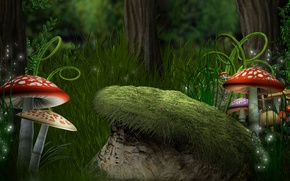 Picture forest, grass, mushrooms, ferns, Amanita, forest, Magic, mushroom