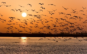 Picture sunset, birds, lake, pack