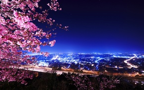 Picture night, lights, building, Cherry Blossoms