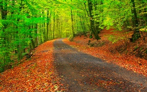Picture road, autumn, forest, leaves, trees