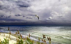 Picture sea, Seagull, surf