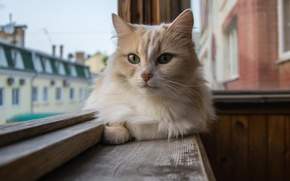 Picture look, wool, Cat, window