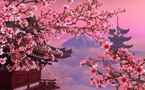 Picture Japan, Sakura, pink, beautiful