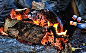 Picture fire, coal, wood, The fire