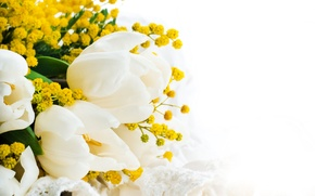 Picture bouquet, yellow, tulips, white background, white, closeup, Mimosa