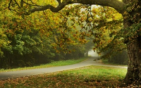 Picture road, leaves, trees, nature, street, road, trees, nature, leaves, street, Autumn trees, beautiful landscape, beautiful ...