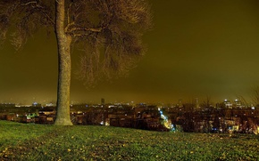 Picture the city, tree, glade, horizon