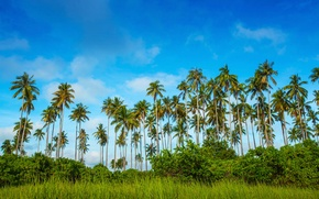 Picture greens, the sky, grass, clouds, trees, tropics, palm trees, the bushes, Malaysia, Bohey Dulang Island