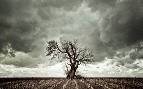 Picture the sky, clouds, tree, dry grass