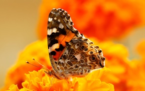Picture flowers, butterfly, paint, insect, moth