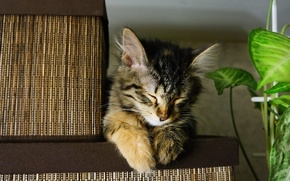 Picture cat, cute, fell asleep