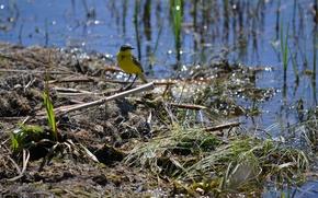 Picture nature, river, Bird