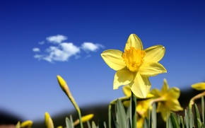 Picture flower, the sky, yellow