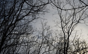 Picture the sky, trees, branches