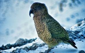 Picture nature, bird, animal