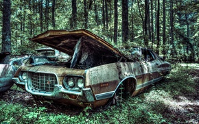 Picture GA, vehicle, USA, forest, 1972, old, old car, car, tree, tree, machine, forest, Gran Torino ...