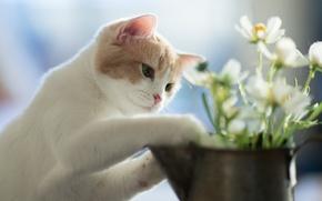 Picture flowers, kitty, Hannah, © Benjamin Torode