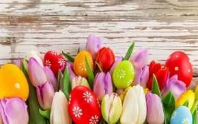 Picture photo, Flowers, Leaves, Tulips, Easter, Eggs, Holiday