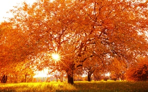 Picture autumn, landscape, nature, tree, yellow leaves, time of the year