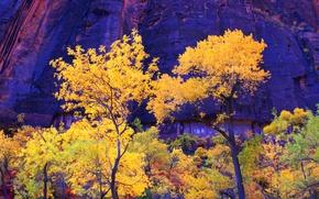 Picture autumn, trees, mountains, rocks, Utah, USA, zion national park