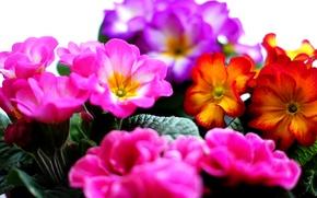 Picture bouquet, petals, garden, flowerbed