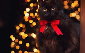 Picture animals, glare, black cat, by Thunderi