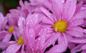Picture flower, purple, drops, yellow, garden, flower, yellow, garden, drops, purple
