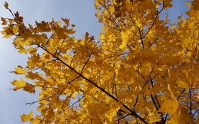Picture autumn, nature, yellow, tree