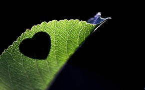 Picture nature, beautiful, heart